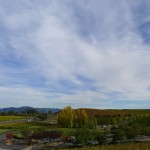 Domaine Carneros Winery - endless vineyard-covered hills. W view.